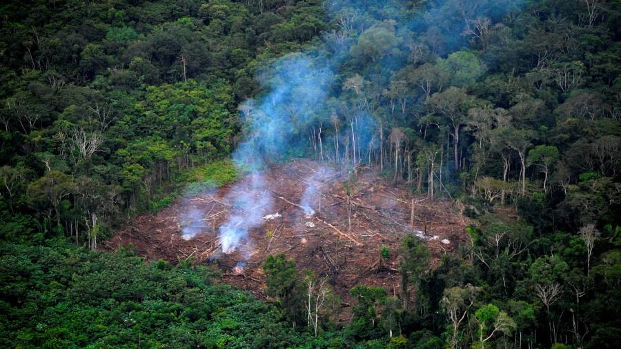 Global finance industry sinks $119bn into companies linked to deforestation
